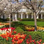 Wiosna w ogrodach Białego Domu