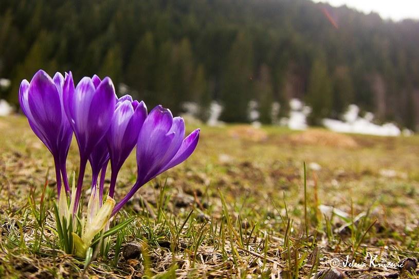 Wiosną warto wybrać się do Czarnogóry /materiały prasowe