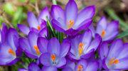 Wiosna za progiem
