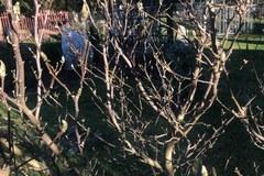 Wiosna zimą w Polsce: Na drzewach widać pąki, z ziemi wychodzą tulipany i krokusy