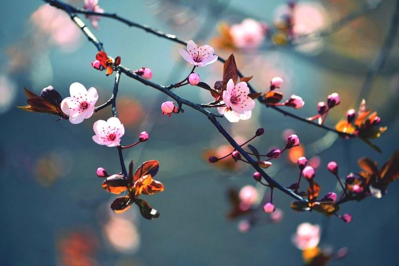 Wiosna /123RF/PICSEL
