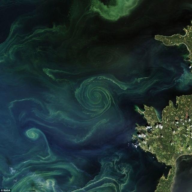 Wir bałtycki ciągle rośnie /NASA