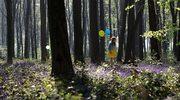 Wirtualne wycieczki po lesie