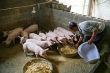 """Wirus grypy o """"potencjale pandemicznym"""" znaleziony w Chinach"""