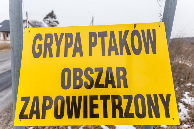 Wirus grypy ptaków H5N8 został wykryty w trzech gospodarstwach w gminie Uścimów w woj. lubelskim /Krzysztof Kaniewski /Reporter