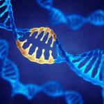 Wirus HIV pokonany dzięki technice CRISPR/Cas9