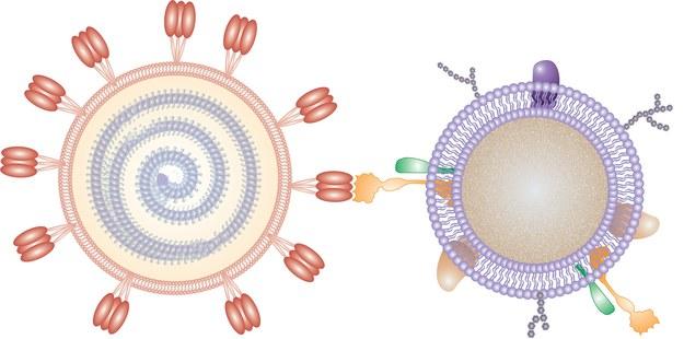 Wirus i nanogąbka /Nano Letters 2020, DOI: 10.1021/acs.nanolett.0c02278 /Materiały prasowe