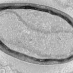 Wirusy, które tworzą swoje własne geny