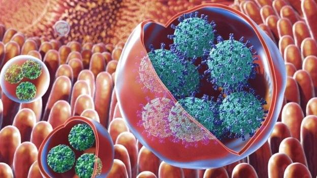 """Wirusy mogą zamykać się w pęcherzykach, które czynią je """"niewidzialnymi"""" /Fot. NIH /materiały prasowe"""