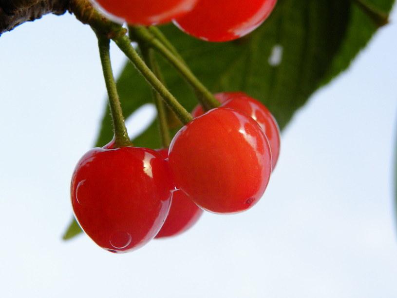 Wiśnie - pasują nawet do dań z mięsa /123RF/PICSEL