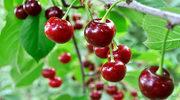 Wiśniowa pielęgnacja - hitem jesieni