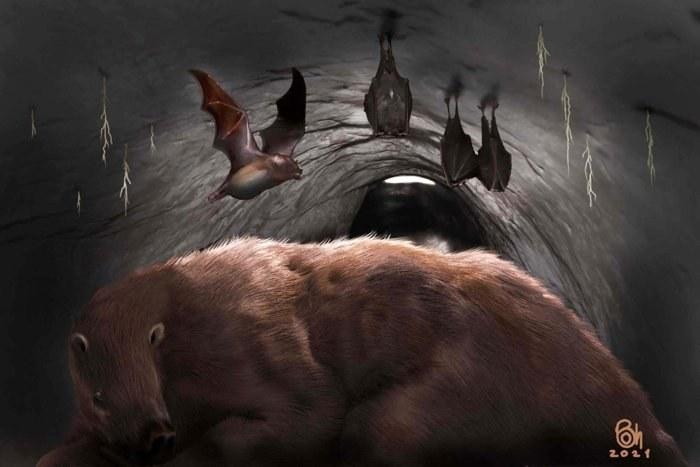 Wizja artystyczna Desmodus draculae /materiały prasowe