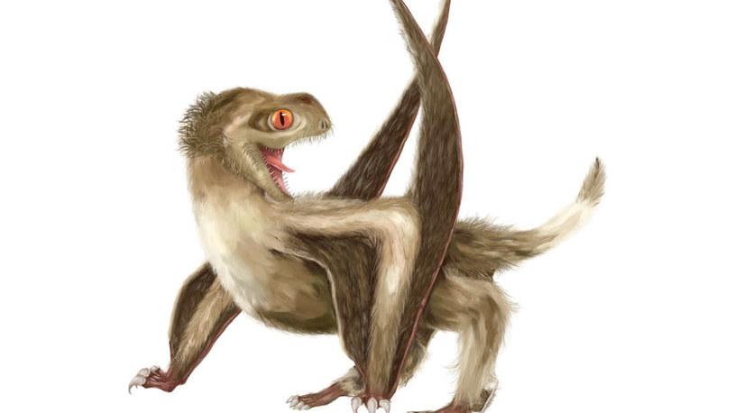 Wizja artystyczna jednego z pterozaurów z późnej jury /materiały prasowe