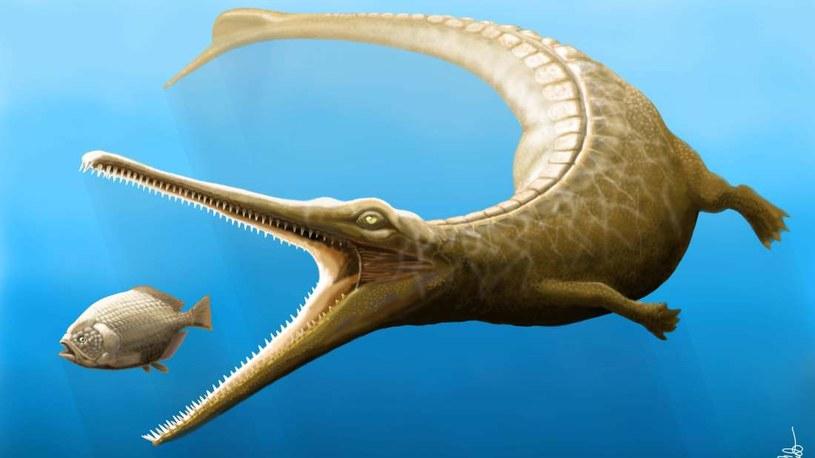 Wizja artystyczna Magyarosuchus fitosi /materiały prasowe