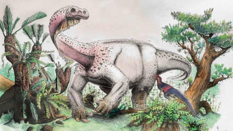 Wizja artystyczna nowo odkrytego gatunku dinozaura /materiały prasowe