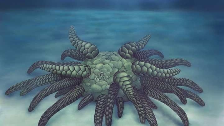 Wizja artystyczna odkrytego Sollasina cthulhu. Fot. Museum of Natural History /materiały prasowe