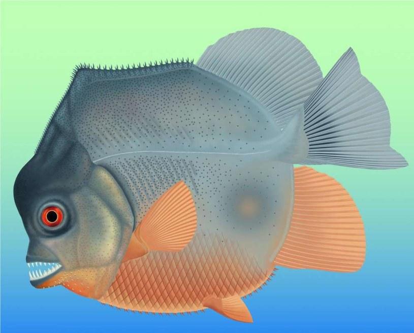 Wizja artystyczna przedstawiająca nowo odkrytą, jeszcze nienazwaną rybę /materiały prasowe