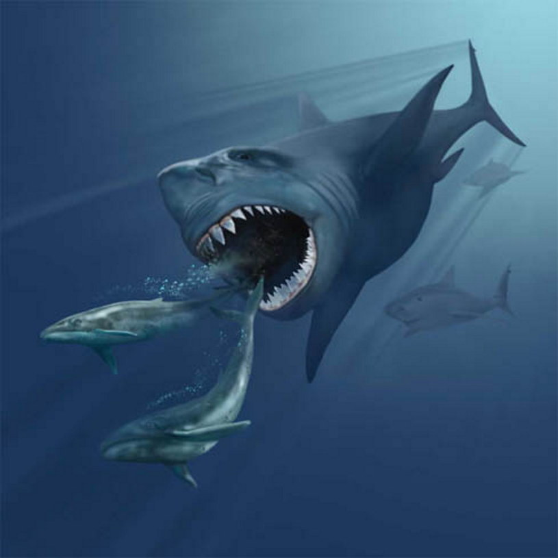 Wizja, jak mógł wyglądać protoplasta rekinów  Zdjęcie. Karen Carr. Fot. Wikipedia /Wikipedia