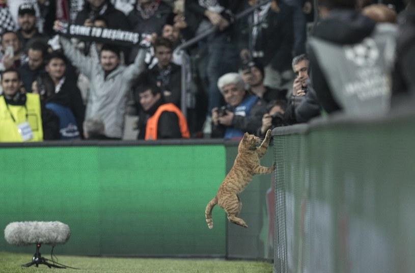 Wizyta kota na boisku spowodowała przerwanie meczu Besiktas - Bayern /PAP/EPA