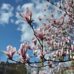 Wkrótce początek astronomicznej wiosny! Czekają nas niezwykłe widoki na niebie