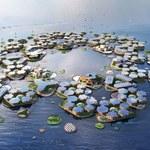 Wkrótce powstanie pierwsze pływające miasto