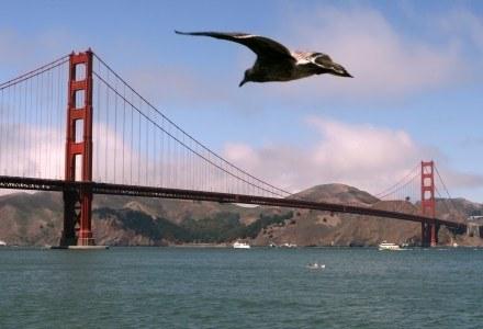 Władze San Francisco zastanawiają się nad wprowadzeniem ostrzeżeń o szkodliwości komórek /AFP