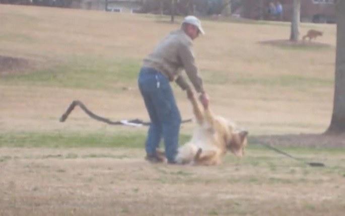 Właściciel na różne sposoby chciał zmusić swojego pupila do wyjścia z parku /YouTube