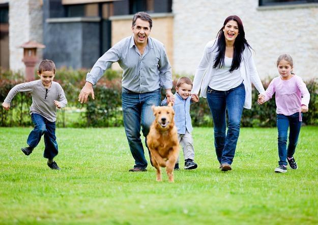 Właściciel psa zapłaci podatek /©123RF/PICSEL