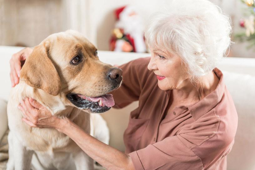 Właściciele psów są dużo bardziej aktywni niż inni ludzie /123RF/PICSEL