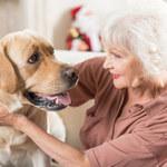 Właściciele zwierząt chorują dwa razy rzadziej