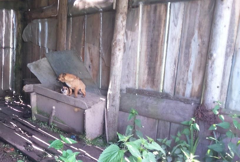Właścicielom odebrano zaniedbane psy /facebook.com