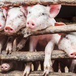 Właściwe stawki VAT na paszę dla zwierząt - wyjaśnienie MF