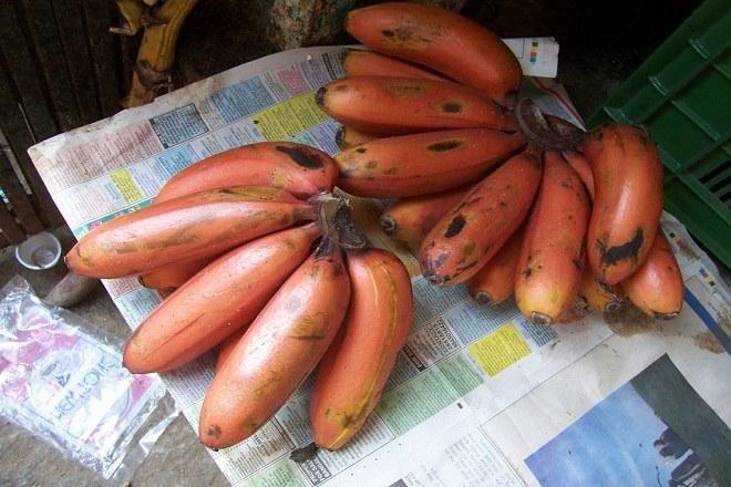 właściwości czerwonych bananów /© Photogenica