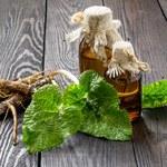 Właściwości herbatki z korzenia  łopianu
