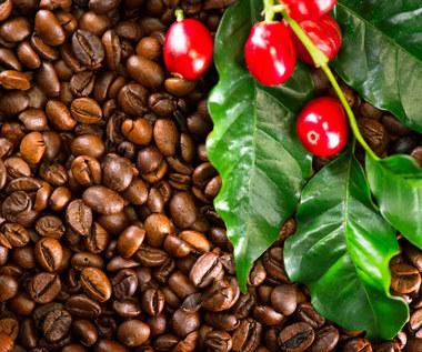 Właściwości i zastosowania kofeiny