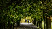 Włochy: Bardzo wysoki mandat za wejście na drzewo