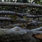 Włochy: Gigantyczne straty w lasach po wichurach