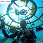 Włoskie podwodne szklarnie, czyli tzw. Ogrody Nemo, przyniosły pierwsze plony