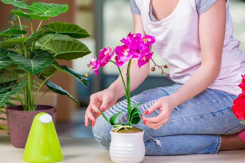 Woda ryżowa to naturalny sposób na zadbanie o rośliny w domu /123RF/PICSEL