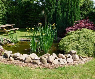 Wodne rośliny - doskonałe do oczka wodnego w ogródku