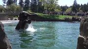 Wodne szaleństwa słonia. Oczarował turystów