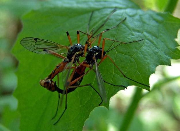 Wojna z komarami kosztuje nas wiele wysiłku, ale efekty są zadawalające! /© Panthermedia