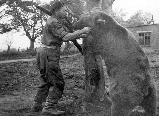 Wojtek w czasie zapasów z żołnierzem II Korpusu Franciszkiem Baczorem /East News
