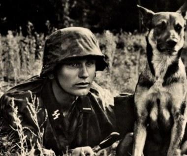 Wooffan SS. Inteligentne psy w służbie III Rzeszy