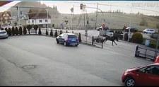Wóz bez woźnicy i pędzące konie. Groźna sytuacja na zakopiance