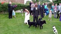 Wpadka na weselu! Do panny młodej podbiegł pies i...