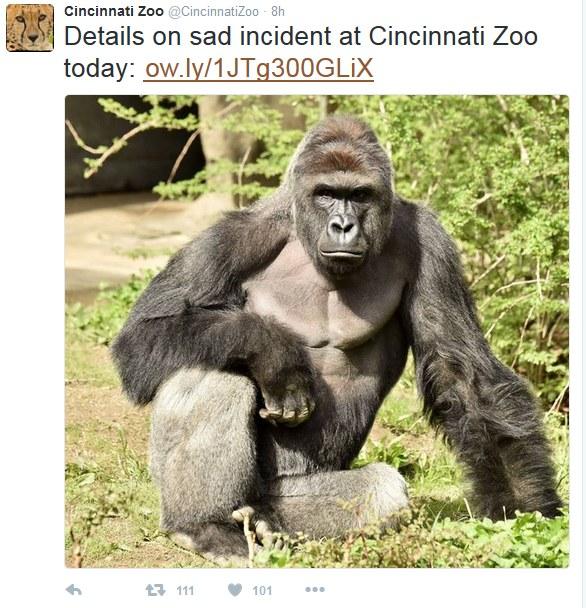 Wpis na twitterowym profilu zoo w Cincinnati /Twitter