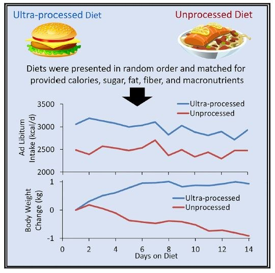 Wpływ rodzaju posiłku na ilość przyjmowanych kalorii i wagę /Hall et al./Cell Metabolism /Materiały prasowe