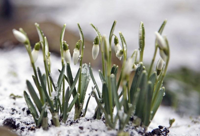 Wraca wiosna? Zdj. ilustracyjne /Agata Pilarska-Jakubczak /East News