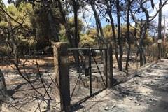 Wraki aut, spalone domy, kikuty drzew. Tutaj kilka dni temu był wakacyjny kurort